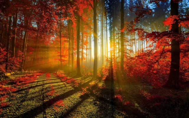 autumn_red_forest